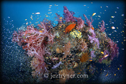 An explosion of reef - © Jez Tryner